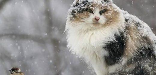 Морози та заметілі: українцям озвучили невтішний прогноз